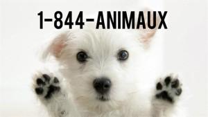 Urgence animaux