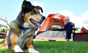bigstock-Friendly-Dog-Camping-48900725-1427733865-600x360